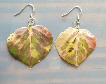 Real Aspen Leaf Earrings