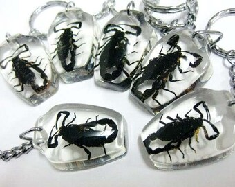 Real Scorpion Resin Keychain Scorpion Keychain Scorpion encased in Resin