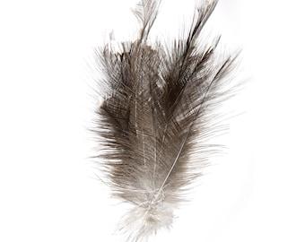 real rhea feathers | interior decoration | ostrich bird taxidermy curiosity |