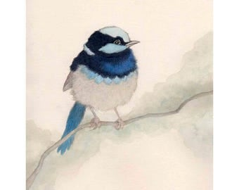 Illustration of Blue Fairy Wren, Wall Art Print, A4+ and A3+ size