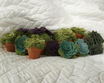 Felt Succulent (Multiple Colors & Options Available)