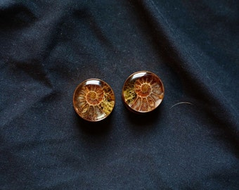 1 inch Reversible Ammonite and Ethiopian Black Opal plugs with moss and lichen