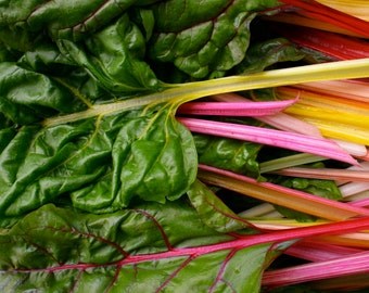"""6 to 30 Live 2-4"""" Plants RAINBOW Swiss Chard Heirloom silverbeet PRE ORDER for April 15 ships priority Spring 2017 discounted sale"""