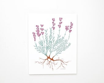 "Lavender Botanical Art Print, 8x10, Herb Art Print, Botanical Illustration, Botanical, Hand Drawn, ""Lavender"""