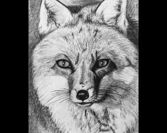 Hand-drawn Fox Print