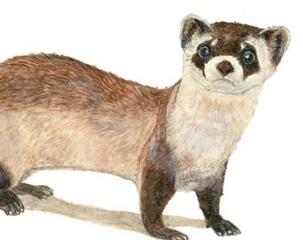 A Black Footed Ferret Painting, Sized A4. A Watercolor Ferret Print. A Small Forest Animal, Also Called A Weasel. For Woodland Nature Decor.