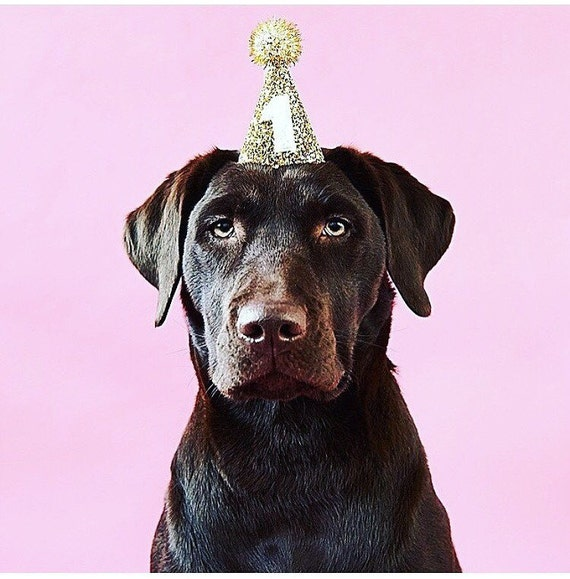 Dog Birthday Party Hat Animal Accessory Handmade Puppy Love