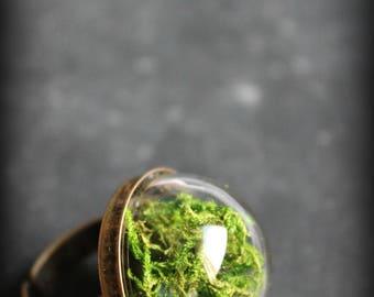 "Ring ""Nursery"" MOSS terrarium"