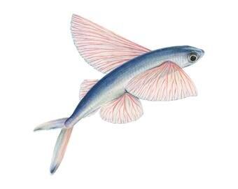 Flying Fish Print