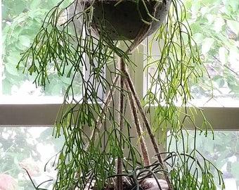 DOUBLE PLANT HANGER: Tiered Jute Eco Hangers, Natural Indoor Outdoor, Home & Garden—Wedding Housewarming Gift—Suspension de Plante/Macetero