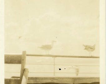 "Vintage Photo ""Faded Seagulls of Golden Beach"" Snapshot Antique Photo Old Black & White Photograph Found Paper Ephemera Vernacular - 161"