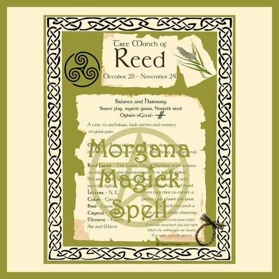 REED CELTIC SACRED Tree