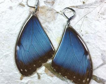 Aretes de Morfo Azul en Resina con ganchos de Acero Inoxidable