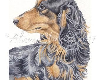 Dachshund Print, Long Haired Black and Tan Dachshund Watercolour