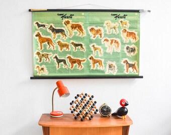 Dog print, vintage dog poster, dog chart, dog breed poster, dog breed print, educational chart Ref: 473
