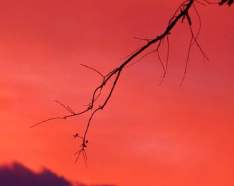 Wabi by Catherine Roché, California Landscape Photography, Red Sunset Clouds Photography, Bare Tree Branches Photography, Fine Art