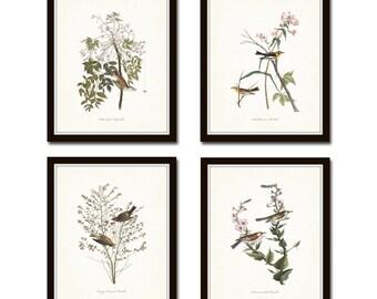 Audubon Bird Prints Set No. 17, Vintage Bird Prints, Giclee, Audubon Prints, Art Print, Wall Art, Bird Print, Cottage, Decor Farmhouse Decor