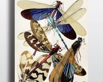 Digital Download, Insect Print, Dragonfly Art, Insect Art, Printable Art, Instant Download, Art Deco, Vintage Print, Antique Illustration