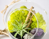 Hanging Terrarium Air Plant, Amethyst Crystal Point, and Pyrite || DIY Kit || Small Round