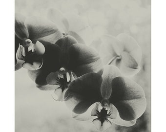Orchid Picture Black and White Flower Photography Gentle White Art Modern Monochrome Nature Photography Macro Flower Art Relaxing Art decor
