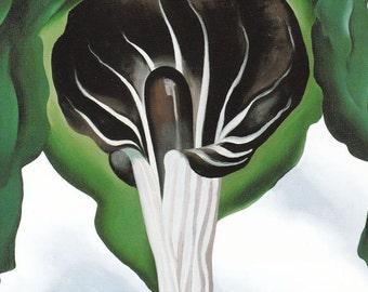Georgia O'Keeffe American art vintage flower print Jack-in-the-Pulpit III