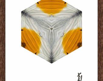 Orange-tip (Anthocharis cardamines) upperwing