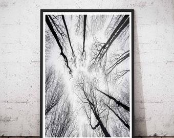 Extreme Minimalism, Minimalist Large Art, Greatest Adventure, Modern Large Print, Wilderness, Large Green Artwork. Forest print, Tree Print