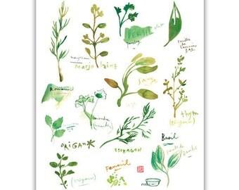 Les Plantes Aromatiques Dans La Cuisine Aquarelle Affiche - Herbes aromatiques en cuisine