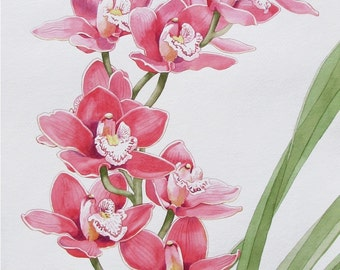 Original Watercolor Painting of a pink Orchid Flower