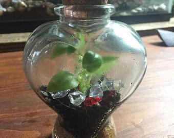 Heart-Shaped Terrarium - Mini Garden