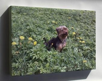 Canvas 24x36; Yorkshire Terrier P2