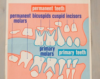 Vintage 1960's Dental Poster (1963) HOW TEETH GROW | Medical Prints, Signs, Vintage Dentist Office | Film Prop