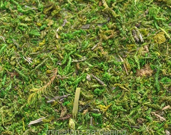 Moss Mat for Miniature Garden, Fairy Garden