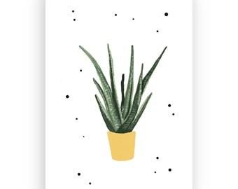 Postcard Aloe Vera