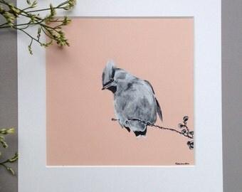 Waxwing, Original Pen and Ink Bird Art