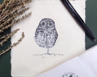 Burrowing Owl, Ink Drawing, 6 x 6 inches