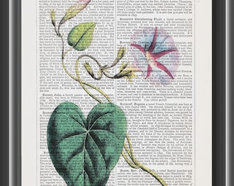 Ipomoea flower upcycled dictionary print botanical print vintage wall art home decor