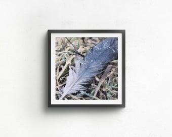 Feather Print / Office decor / Desk decor / Living Room decor / Macro feather