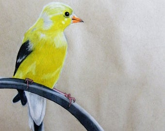 Original colored pencil drawing - Eastern Goldfinch bird
