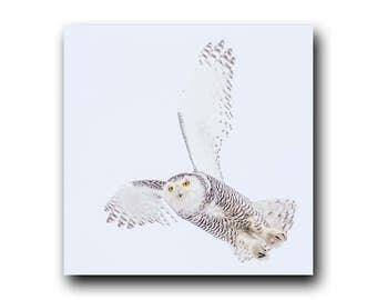 Beautiful Snowy Owl in Flight Photo by GreyGhostNaturePhotography