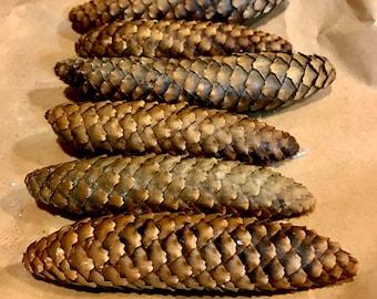 Natural Spruce pine cones