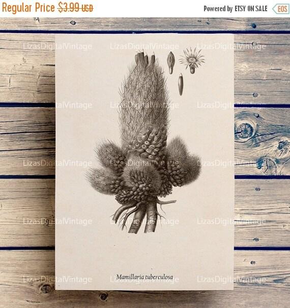 50% OFF Cactus print, Cactus wall art, Cactus printable, Cactus flower, Cactus art print, Instant download print, Cactus clip art, Wall art