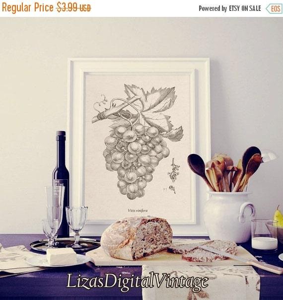 50% OFF Kitchen prints vintage, Grapes, Prints for kitchen, Digital print, Botanical printables, Kitchen prints, Vintage illustration, Print