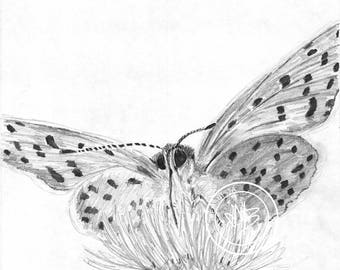 Butterfly. Original printing drawing on the paper. From insekt collection. Handmade illustration