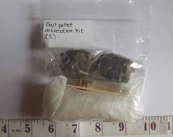 Owl pellet dissection kit (1)