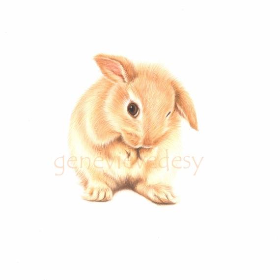 Dessin original d 39 un lapin lapin coquin dessin aux - Dessin un lapin ...