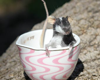A Quarter Cup of Taxidermy Mouse
