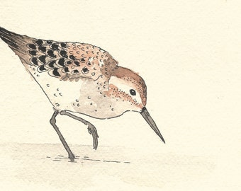 Original illustration - Sandpiper