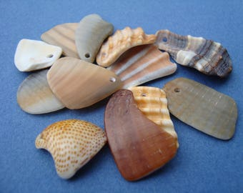 Perforated shells-12 top drilled sea shell shards M-craft supplies-office supplies-jewelry supplies-hand made