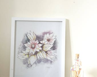 Blushing Bride Proteas Print of Original Artwork